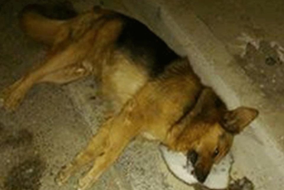 ARAF denuncia envenenamiento de perros