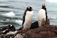 Пингвини на антарктическото крайбрежие