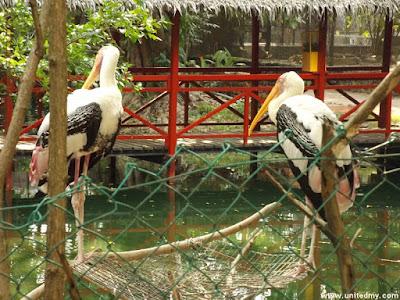Penang Bird Park 2016