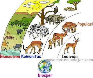Pengertian, #4 Tingkatan Ekologis Biosfer