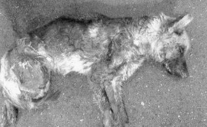 Αποτέλεσμα εικόνας για kainourgiopress σκύλος