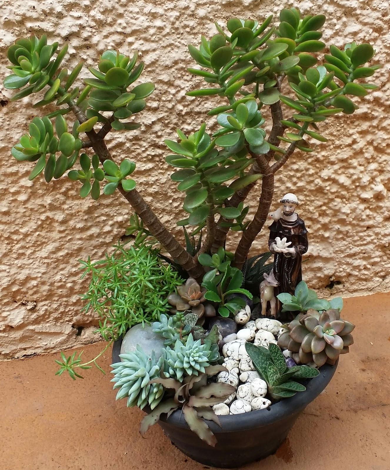 Di?rio de uma Sementeira: Mini-jardim de suculentas