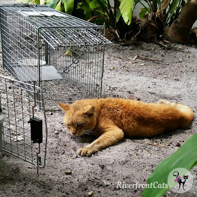 riverfront cats downtown miami to rescue a cat you have