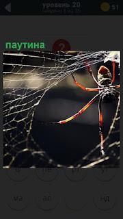 Паук плетет паутину, которую хорошо видно в свете солнечных лучей