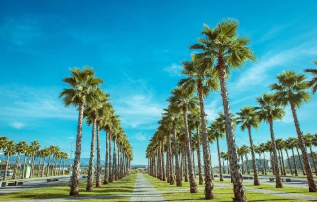 """Quảng trường """"cọ"""" điểm nhấn của khu Palm Village"""