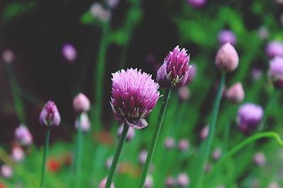 flores comestibles