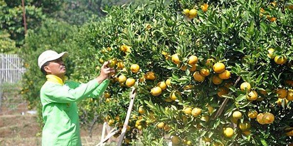 Agrowisata Batu kuycuy.blogspot.com