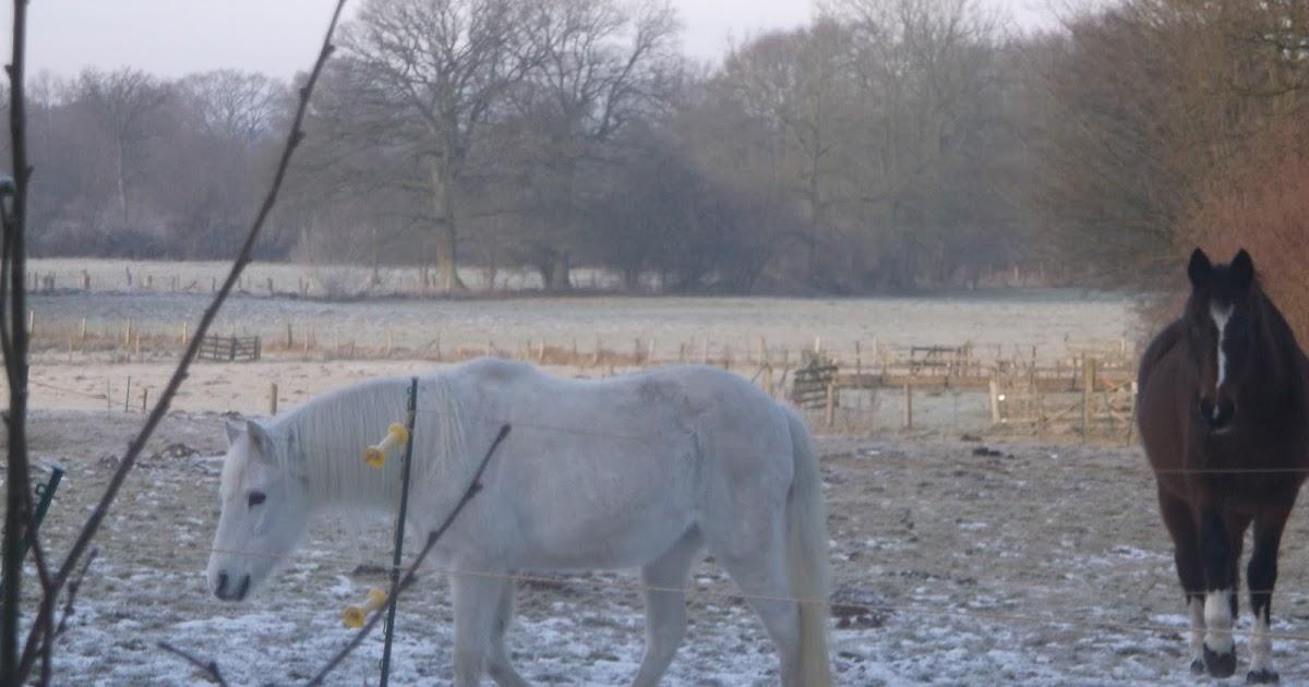 pferde unsere stolzen freunde gefahr durch gefrorenes saftfutter wie m hren im winter. Black Bedroom Furniture Sets. Home Design Ideas