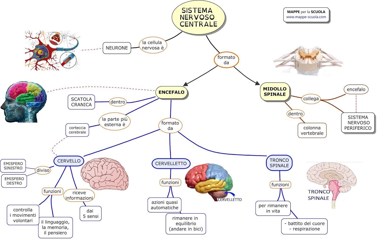 Boys che contanoblog sistema nervoso ed endocrino for Simulazione test scienze della formazione primaria
