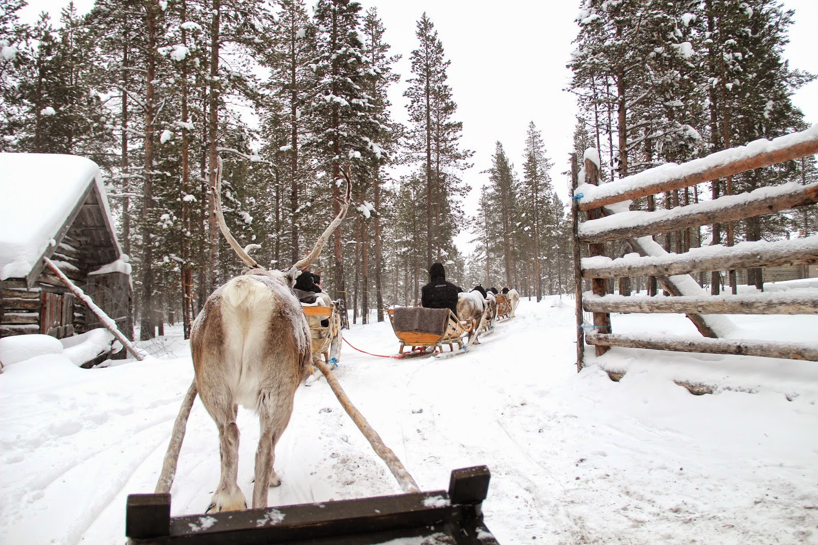 Winter Activities Finland