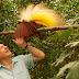 O medo de pássaros é tema da programação Especial Fobias neste sábado no BBC Earth