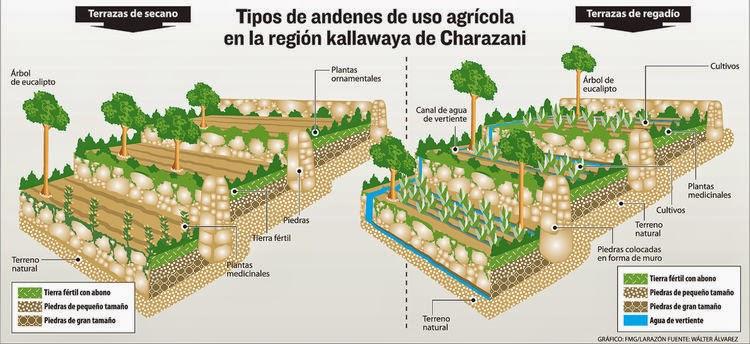 Terrazas Agrícolas Una Tradición Contra El Cambio Climático