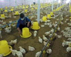 Livestock insurance
