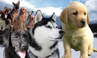 Imagen de variedad de perros de razas distintas