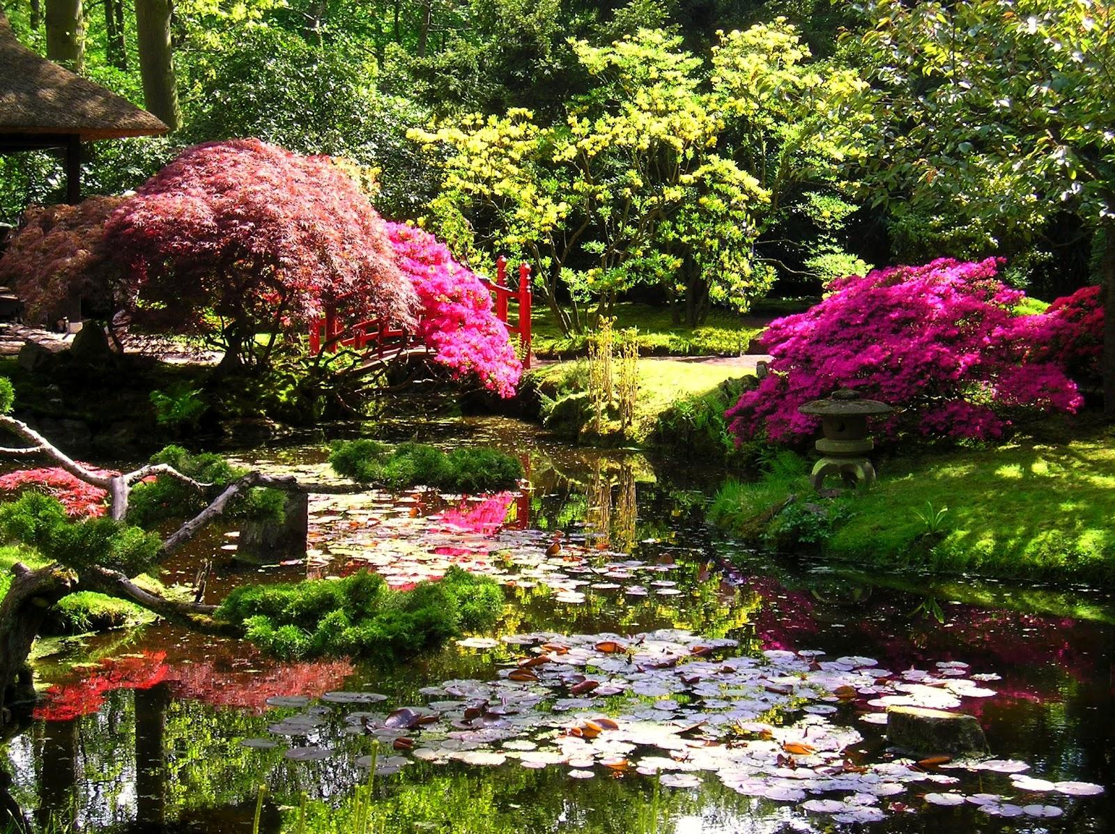 Japanese zen garden japanese garden the hague for Garden giardini