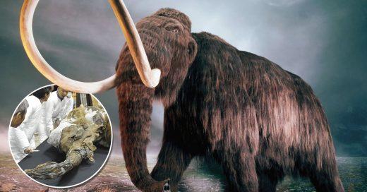 Calentamiento global pudiera ser un paso para clonar mamuts