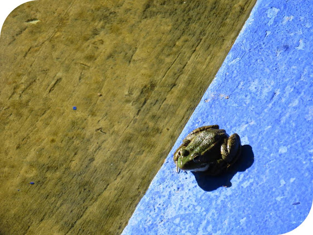 Long Weekend in Marrakech - Sidewalk Safari - Frog at Jardin Marjorelle