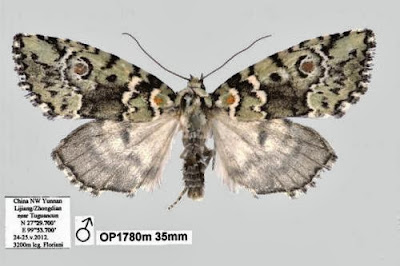 New Species