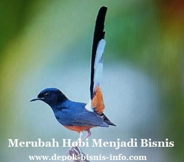 Merubah Hobi Merawat Burung Menjadi Bisnis Depok Bisnis Info