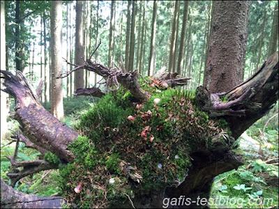 Große Baumwurzel im Wald