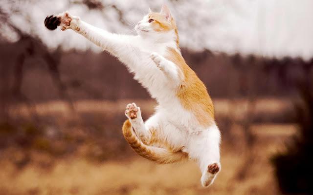 Kat springt en valt aan