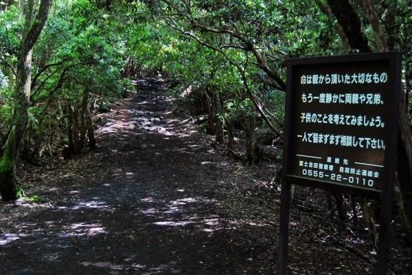 Fakta Menarik Hutan Aokigahara