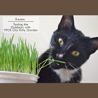 YPCK city kitty garden review