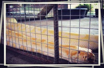 Agape-Loay-Zoo