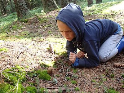 grzyby 2017. grzyby w lipcu, grzyby na Orawie, goryczak żółciowy, siatkolist maczugowaty, gołąbek, zajączek, borowik ceglastopory