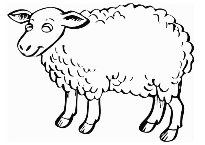 Gambar Mewarnai Domba Terbaru Gambarcoloring