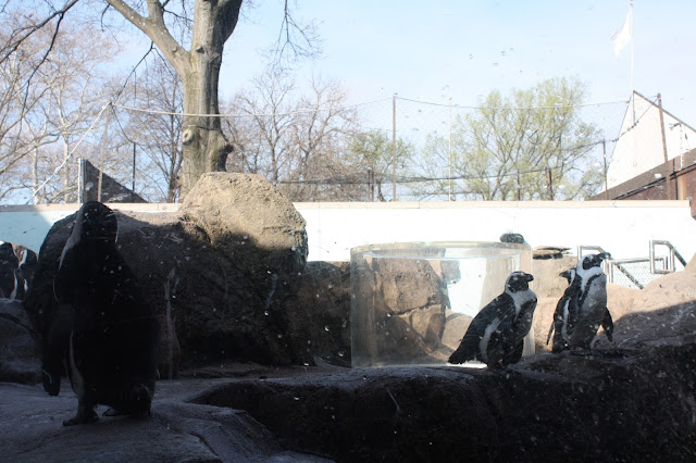 The Penguin Exhibit at The National Aviary in Pittsburgh.