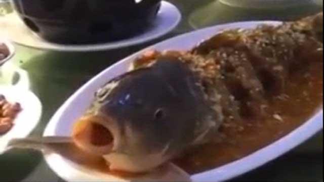 بالفيديو.. سمكة تتحدى الموت بعد الطهي وتشرب الخمر