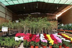 دراسة جدوى فكرة مشروع مشتل نباتى فى مصر 2019
