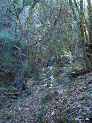 Cerro Viejo - Verde