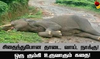The story of making of kumki elephant