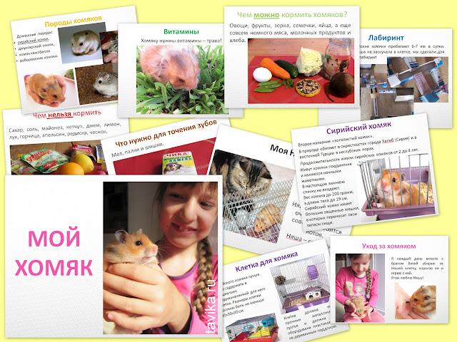 """проект """"Мой домашний питомец"""" 1 класс - презентация для детей"""