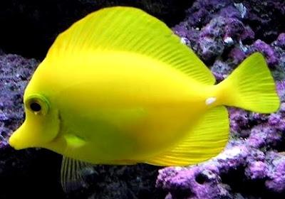 Foto de pez bajo el agua