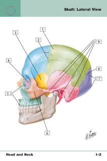 Libros de Medicina en pdf Anatomy Flash Cards 3rd Edition Netter's