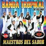 banda tropikal de vallenar maestros del sabor