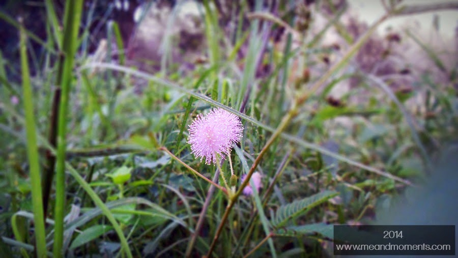 early morning click, dew on flower, grass photography, grass flower