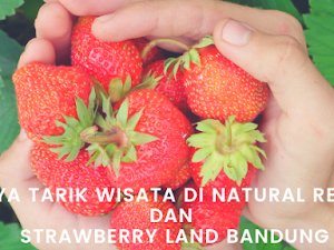 Daya Tarik Wisata di Natural Resto and Strawberry Land Bandung
