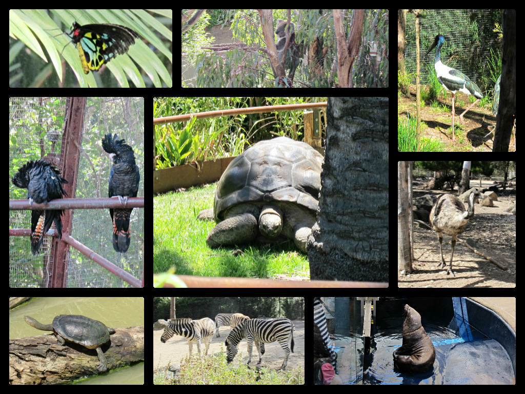 image melbourne zoo montage butterfly major mitchell cockatoo long necked turtle seal zebra jabiru giant tortoise koala emu
