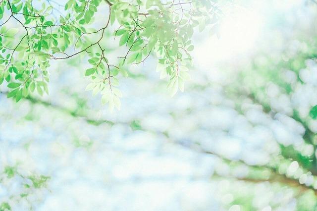 STT & Những Câu Nói Hay Về Tuổi Thanh Xuân Tươi Đẹp, Ý Nghĩa