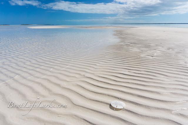 sand dollar, sand bar, flats, Powell Cay, Abaco Islands, Bahamas