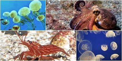 Arte de criaturas marinhas no fundo do mar