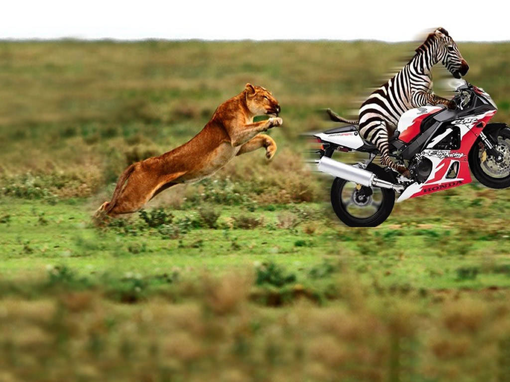 Funny Zebra | Funny And Cute Animals