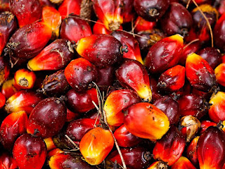 Oil Palm Fruit Pictures
