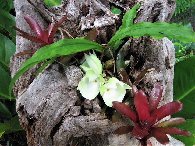 Canaima, flora