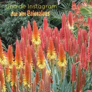 Una cuenta de Instagram: Aloe Aloes