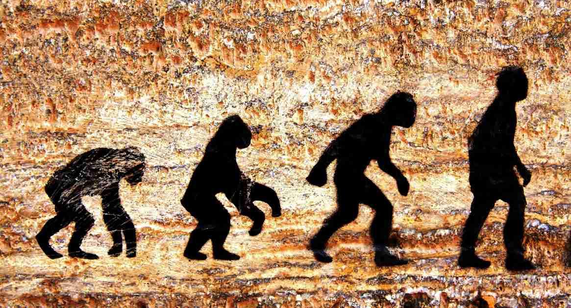 Las evidencias de la evolución - Biología
